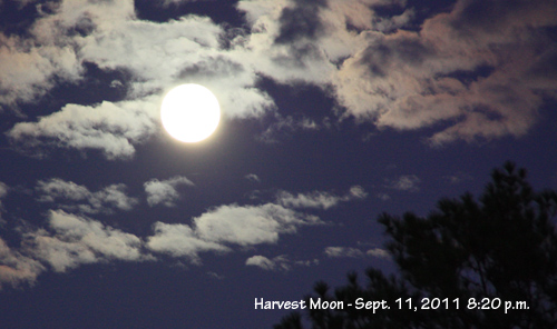 3 Reasons To Play Shine On Harvest Moon Today On Your Ukulele